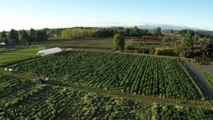 Oregon-Fusion-CBD-Farm