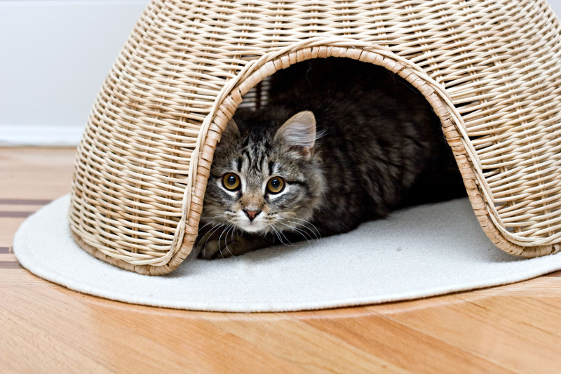 cat-hiding-in-a-basket-cbd-hemp